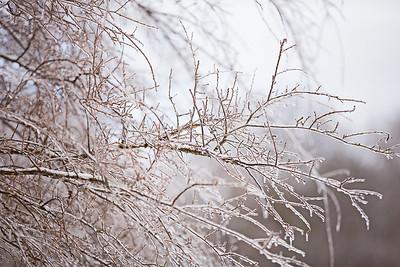 Snow 16 _111