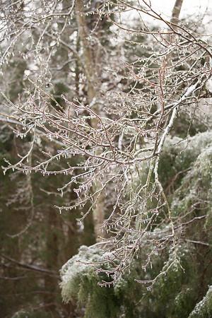 Snow 16 _114