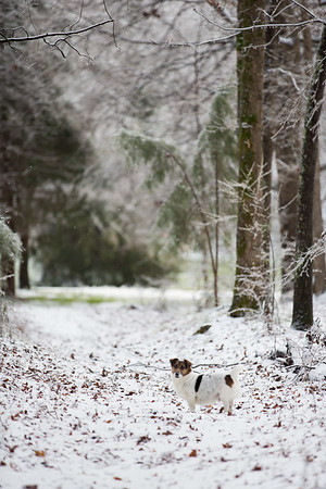 Snow 16 _41