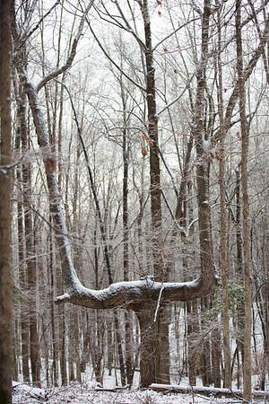 Snow 16 _38