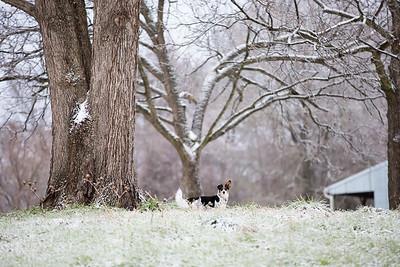 Snow 16 _1