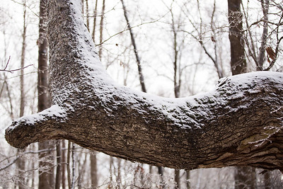 Snow 16 _100