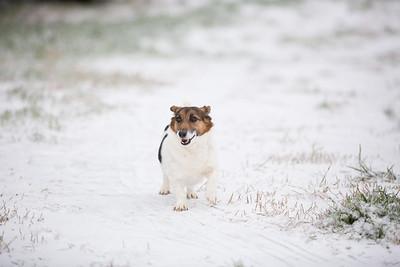 Snow 16 _56