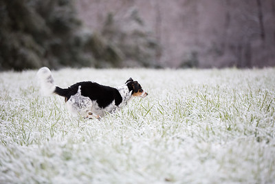 Snow 16 _13