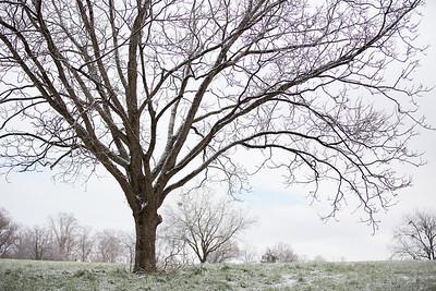 Snow 16 _115