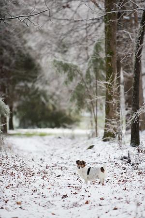Snow 16 _42