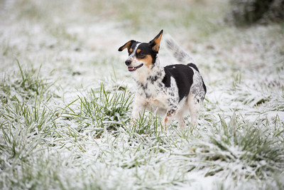 Snow 16 _55