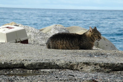 This kitty went fishing with his owner every day.  Nice life!