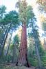 California-010