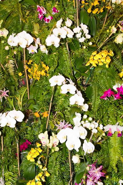 Charlotte Botanic Garden-020