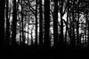 trees 6b