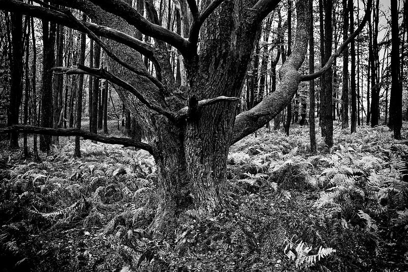 trees 10