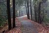 Blackwater Falls pathway: Canon