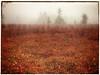 cranberry jocelyn phone_6067