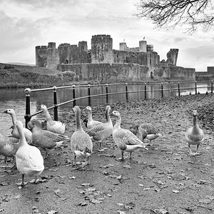 Caerphilly Castle in South Wales 15