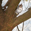 Squirrel in snow-covered tree 1