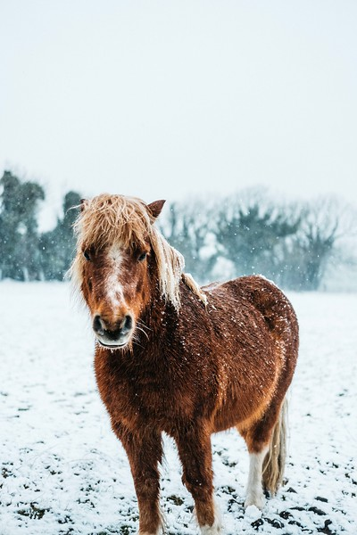 March Snow XH1