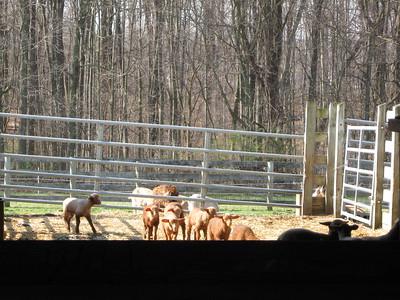 kellen's class trip to the farm