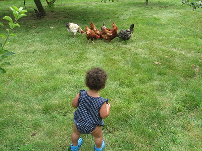 gonna get me some chickens!