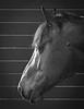 Horses like having their portraits taken too!