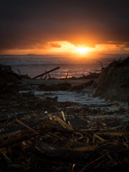 Driftwood & Debris