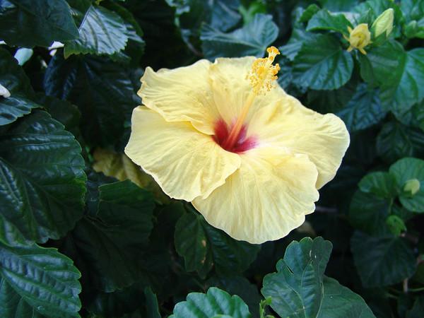 Hawaii1 043