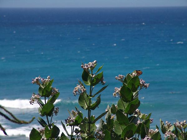 Hawaii1 081