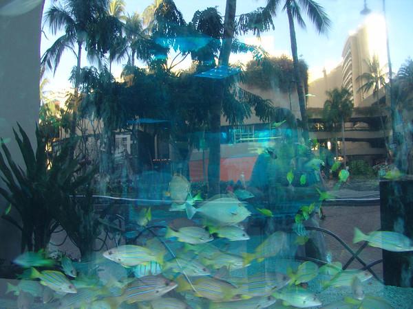 Hawaii1 039