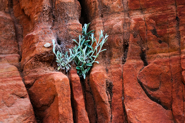 Life finds a way at Zion National Park