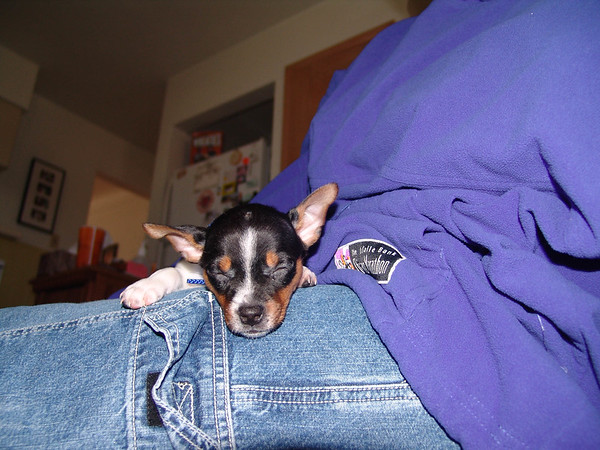 carla'sWdresshop-g-ma dogs 081