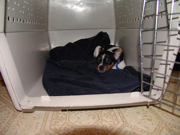 carla'sWdresshop-g-ma dogs 055