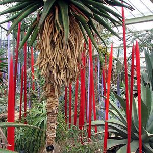 Red and Neodymium Reeds