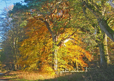 Autumn Coulrs in West Lothian