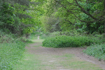 Rendlesham Forrest