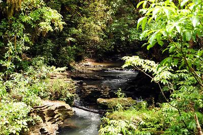 Ruakuri Reserve,