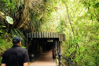 Waitomo Caves,