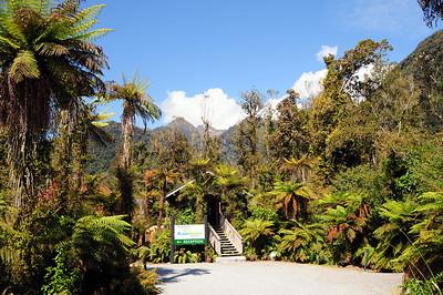 Franz Joseph Rainforest