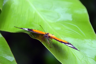 Butterfly Park