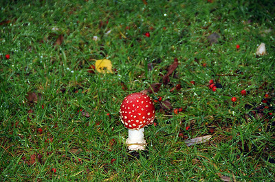 Funghi at Loch Lomond Campsite