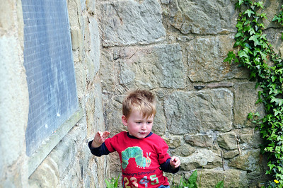 Toby at Whittington Castle