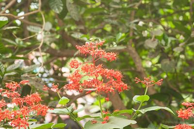 Eden Project Flowers