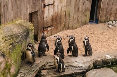 Seal Sanctuary, Gweek
