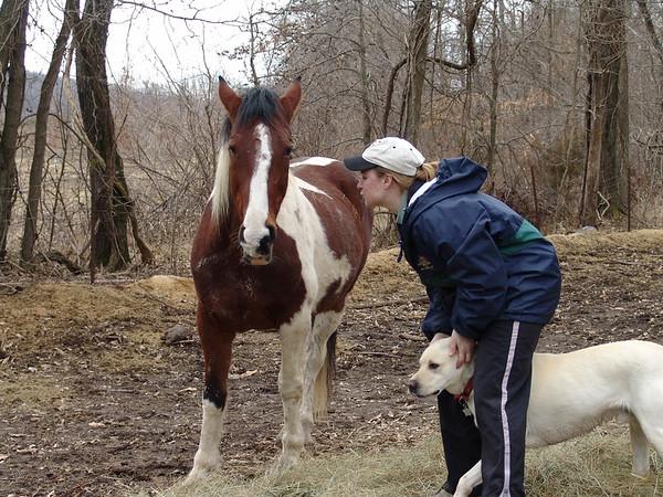 Horse 055