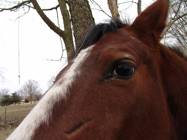 Horse 036