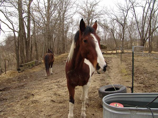 Horse 032