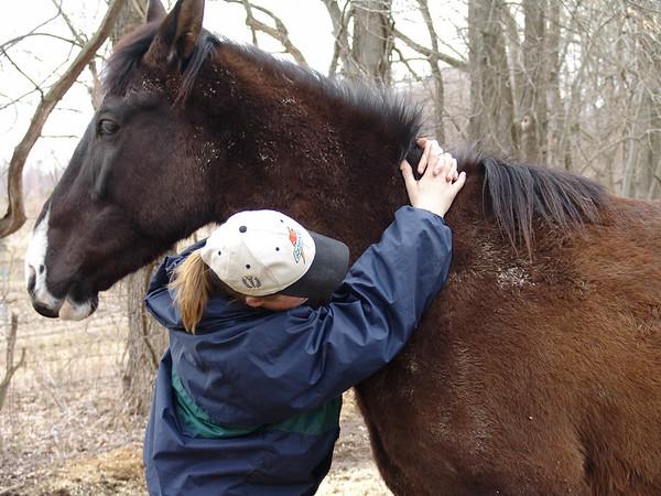 Horse 072