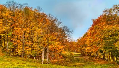 Fall Foliage in Mt Snow