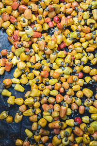 Goa and cashew season