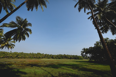 Endless coconut trees