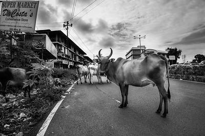Street herd